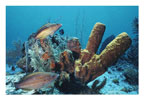 Parrotfish and Yellow Sponge