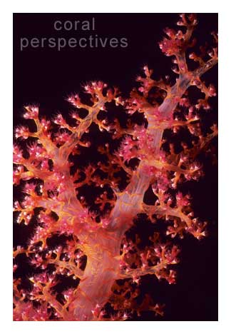 Red Soft Coral Stem