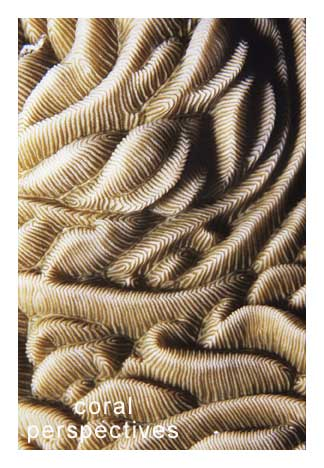 Swirling Hard Coral