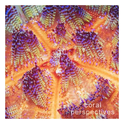 Fire Urchin Close (square)