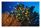 Scene at Potluck Dive Site