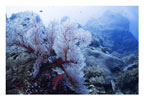 Red and White Fan Scene