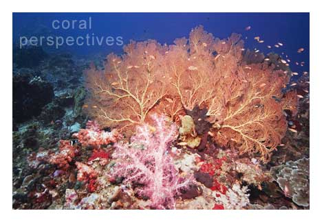 Andaman Fan and Soft Coral Scene