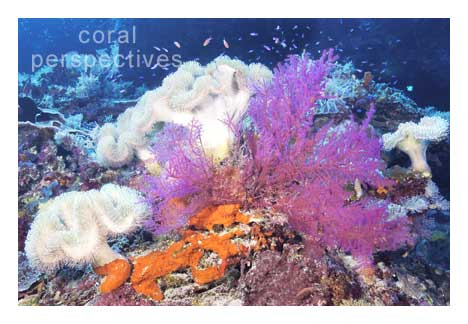 White and Magenta Soft Corals
